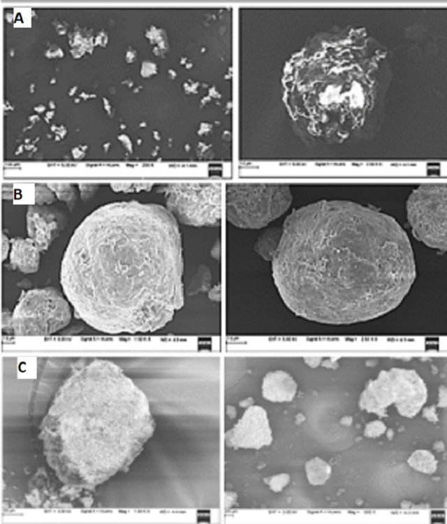 Figure 1: SEM images of uncoated microspheres of drug – resin complex (A), carbopol coated microspheres (B) and polycarbophil coated microspheres (C)